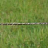 Agrovete - Corda TurboLine castanha 500m 6 Thumb