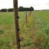 Agrovete - Isolador W Preto para Arame 4 Thumb