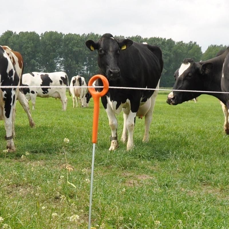 Agrovete - Poste Ring Top 1m - 10 uni. 3